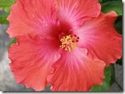 Flowers 367